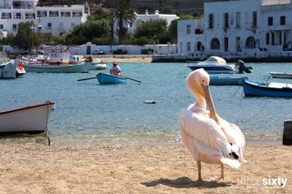 about mykonos sea side studios pelican